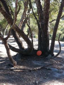 How do you get around the tree?